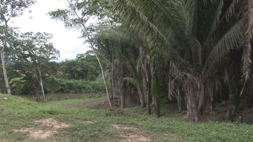 Cahune Palms & River